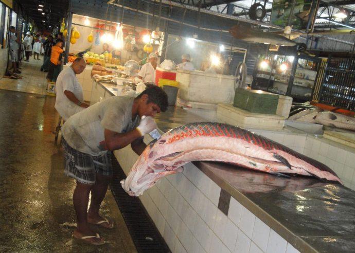 Piracuru no mercado de Manaus