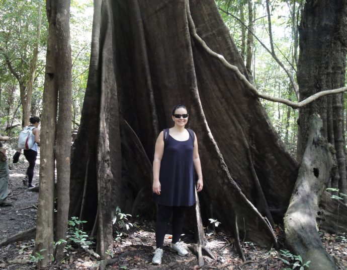 Do lados das árvores gigantes