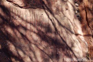 Fóssil no Kings Canyon