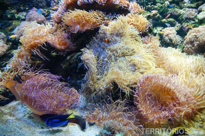 A Grande Barreira de Corais fielmente representada no Sydney Aquarium