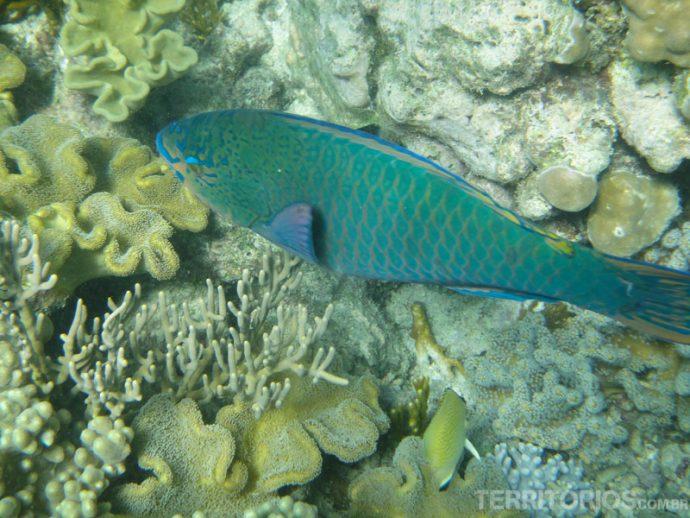 Peixes de todos os tamanhos e cores