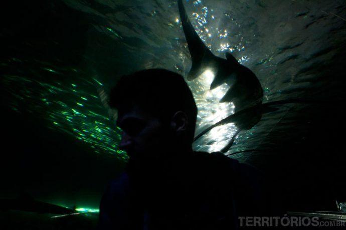 Caminhar com tubarões passando por todos os lados num ambiente sinistro