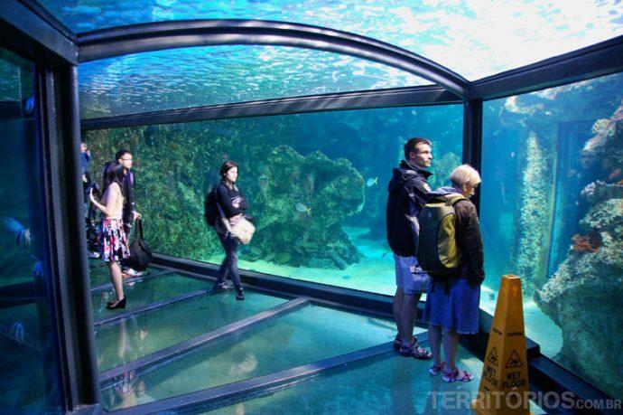 neis de vidro onde os peixes circulam por todos os lados