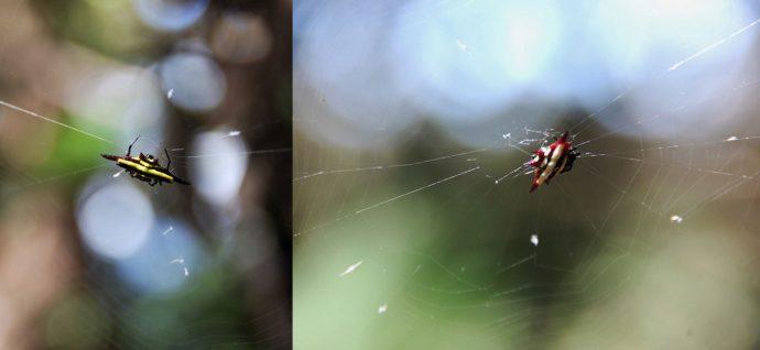 Aranhas diferentes