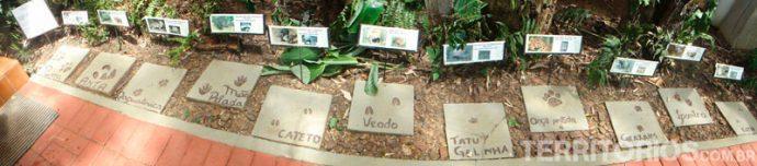 Pegadas de animais na trilha da Bananeira