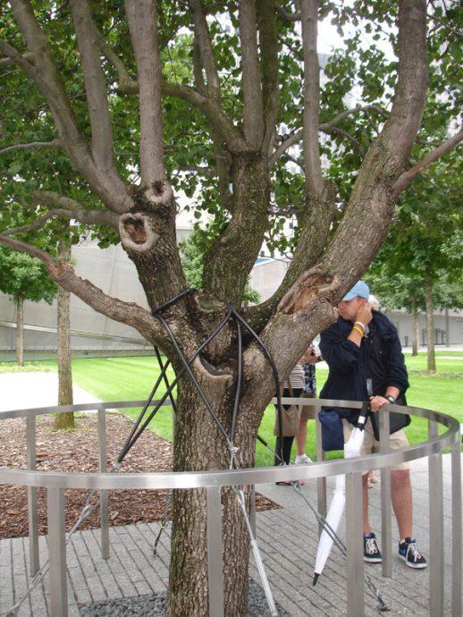 A árvore sobrevivente