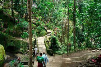 Trilha na Sagrada Floresta dos Macacos