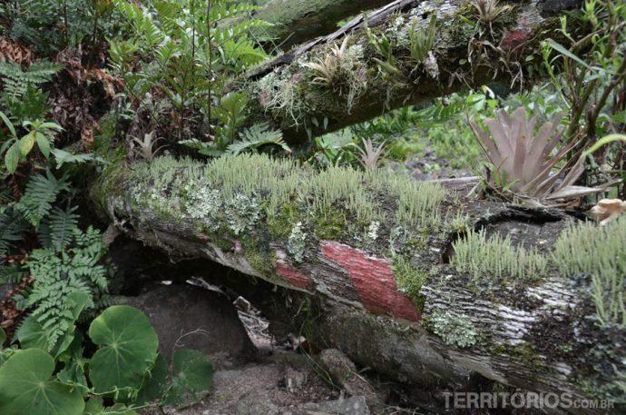Rica vegetação e pureza do ar nas manchas vermelhas