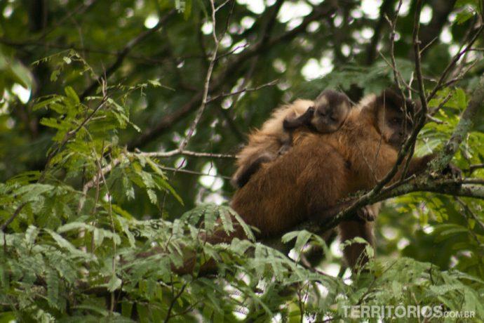 Mãe carregando o seu filhote