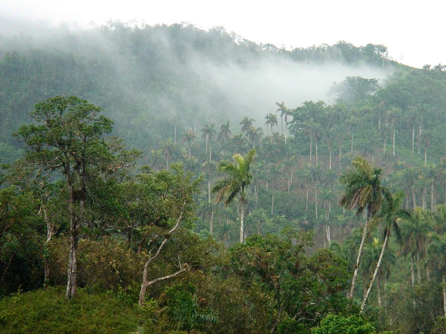 Lindo vale em La Palma