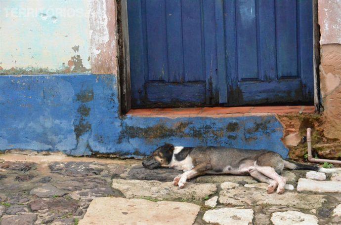 Sono tranquilo do vira-lata em Alcântara, Maranhão - Brasil