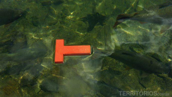 O T flutuando com os peixes no Balneário ..., em Bonito