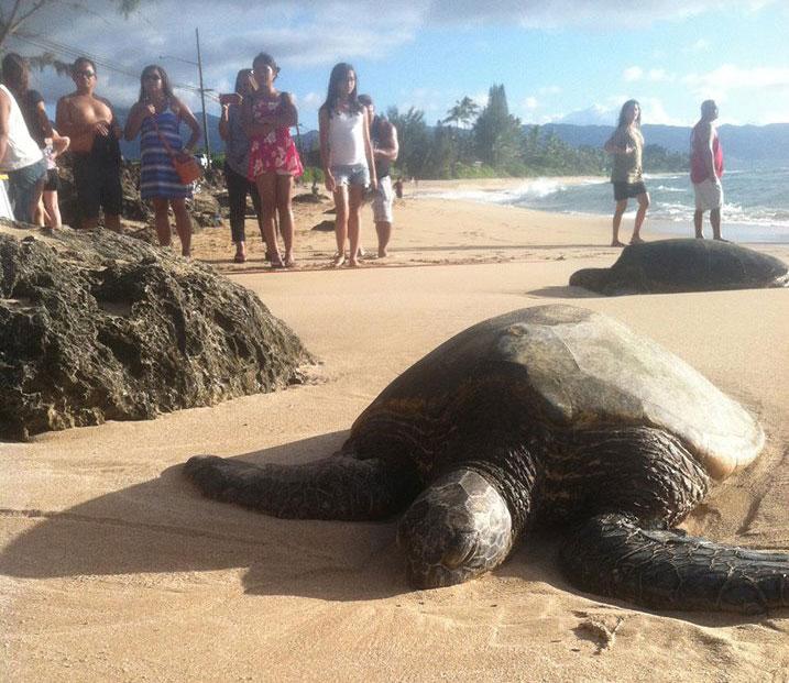 ilha no havai