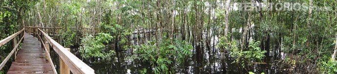Passarelas no meio da floresta alagada. Quando chove a sensação é que a água vai subir rápido
