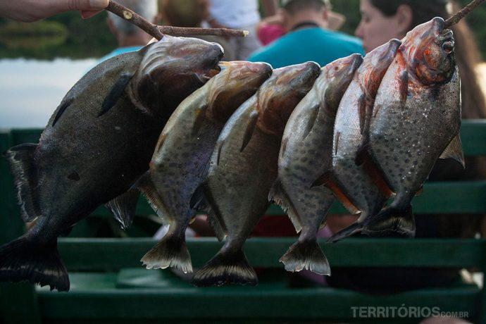 Piranhas para o jantar
