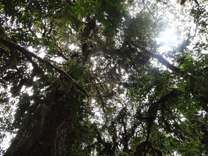 Bosque Nebuloso