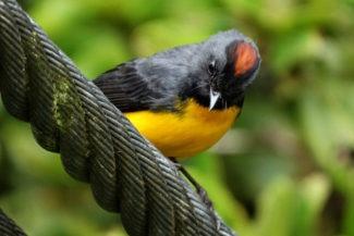 Costa Rica tem variadas espécies de pássaros
