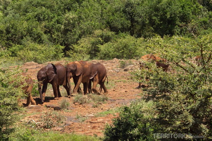 Orfanato de elefantes em Nairóbi