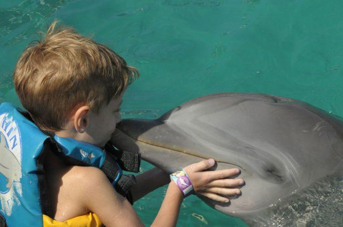 Os golfinhos são animais doces e inteligentes