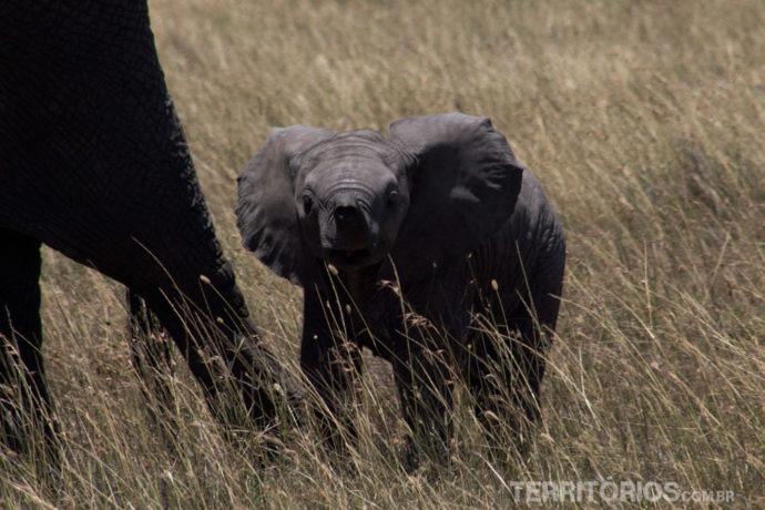 Elefantinhos babies ou adolescentes foram os mais vistos