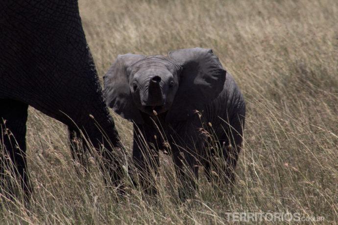 Filhote de elefante recém nascido emociona todos no jipe