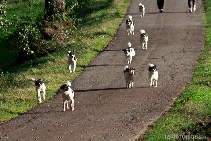 Cachorros correndo em nossa direção