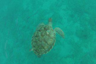 Tartaruga no fundo (foto de Trilhas e Aventuras)