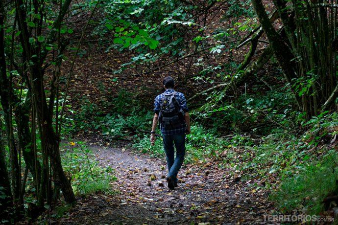 Trilha no bosque no Parco Sassi Di Roccamalatina