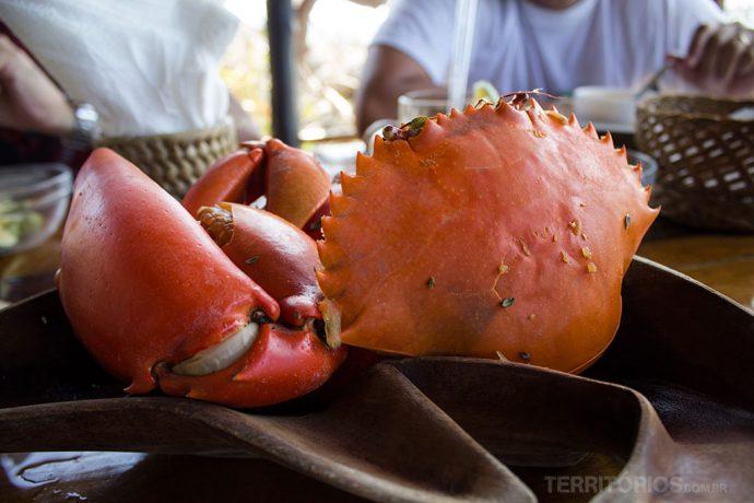Caranguejo gigante do Oceano Índico