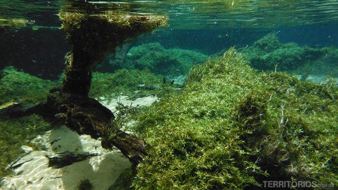 Vegetação nofundo do rio