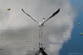 ... força no bater as asas ...