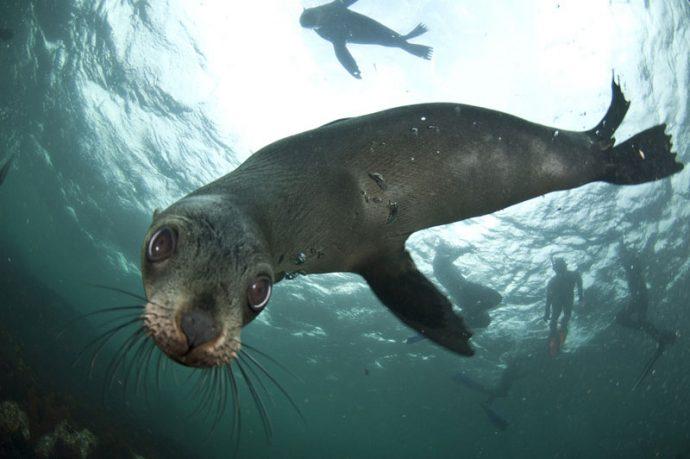 Foto da Animal Ocean com equipamento perfeito para mergulhar
