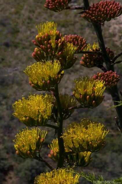 Flores colorem a paisagem em Jerome