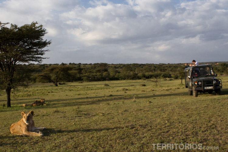safari no mundo