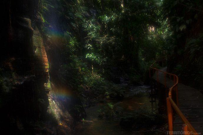 Características do Bioma Amazônia no Complexo Pedra Caída