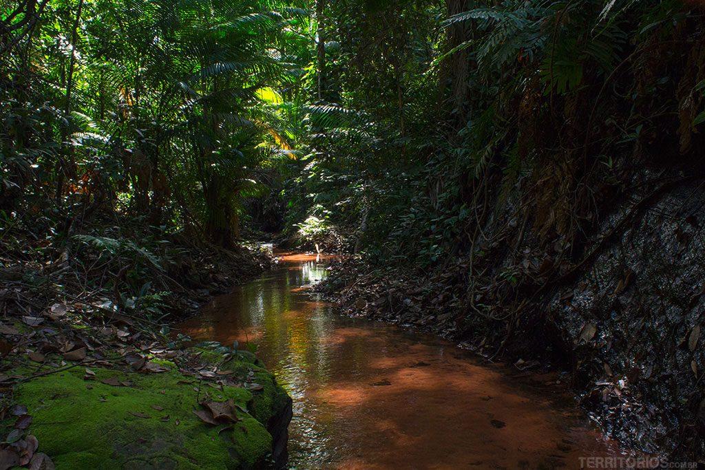 Riachos de água cristalina no interior do parque