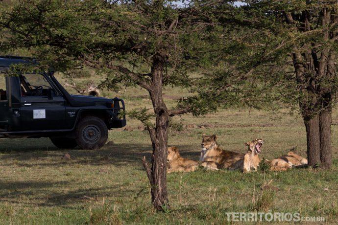 Humanos ficam presos no jipe e leões soltos