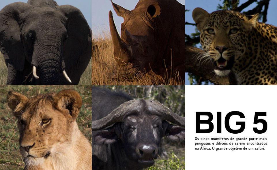 Big Five: o objetivo de um safari