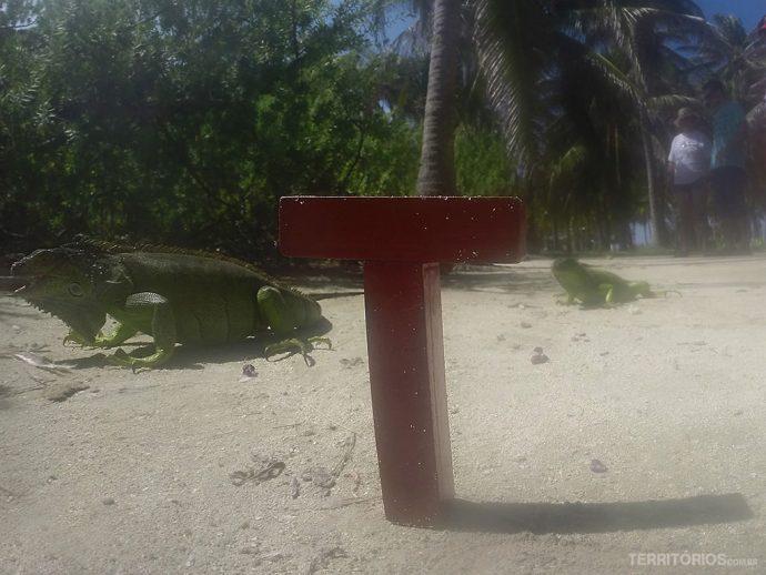 T interagindo com as iguanas de Johnny Cay, em San Andrés