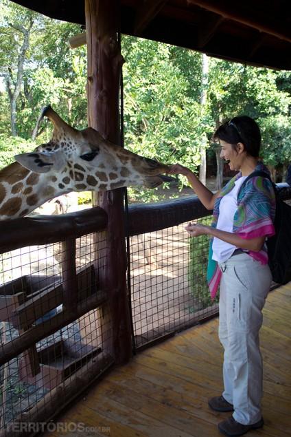 Interagindo com a girafa em Nairóbi