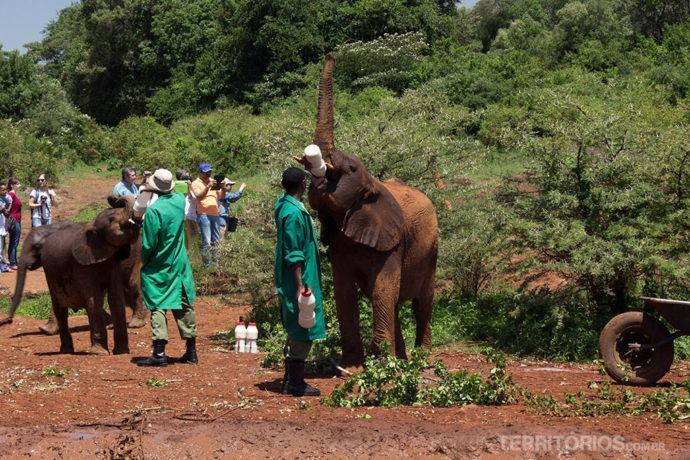 Orfanato abriga elefantes de 0 a 7 anos