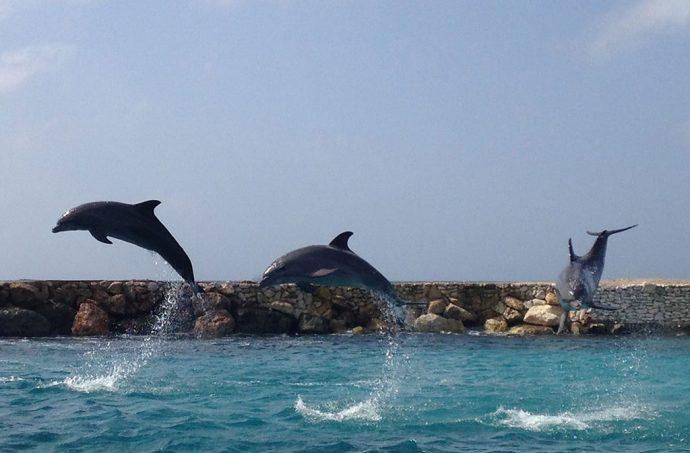 Esses golfinhos do Sea Aquarium são encantadores