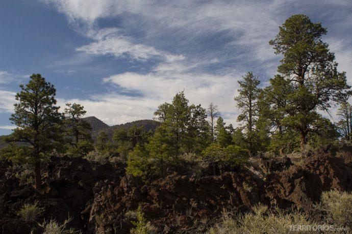 Lava do vulcão entre os pinheiros