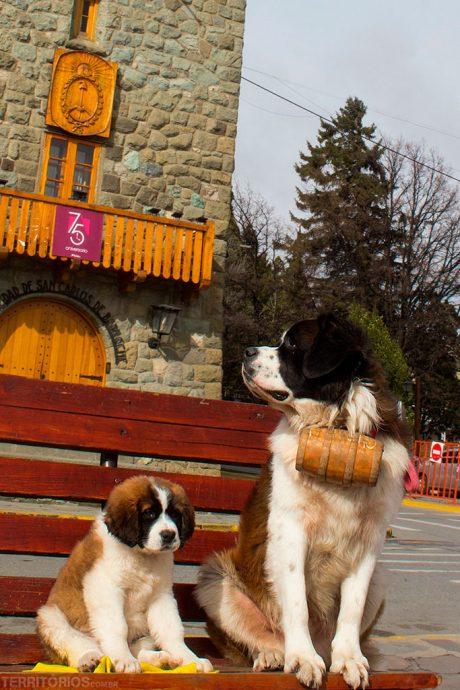 Cachorros esperando as fotos com os turistas
