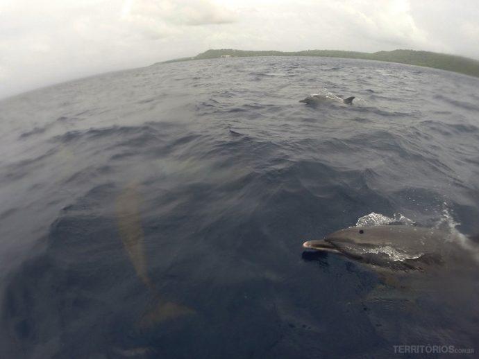 Um mar de golfinhos
