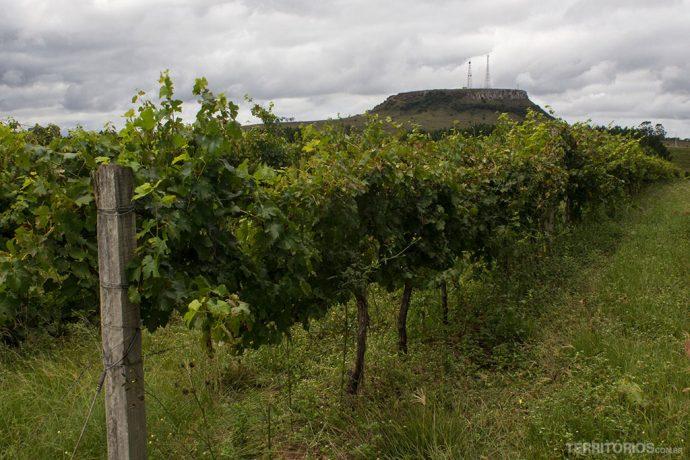 Vista da Vitivinícola Cordilheira de Santana na Ferradura dos Vinhedos