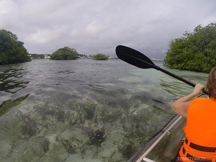 Vegetação marinha bem visível na água cristalina