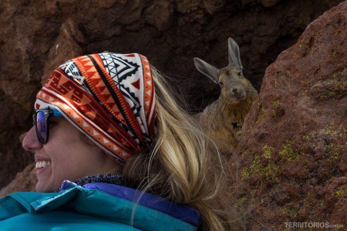 Viscacha se escondendo da gente nas pedras