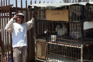 Vendedor de galinhas na favela