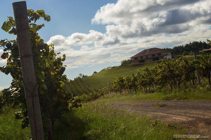 Vinícolafotografada no verão depois da colheita. São 20 hectares de vinhas